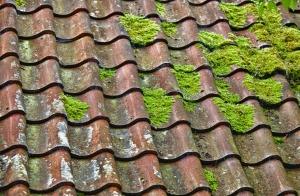 Sammaldunud katus